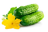 Fresh cucumber with green leaf and flower