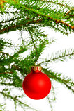 red decoration ball on spruce branch