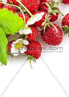 Berries fresh wild strawberries with green leaf and flowers