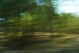 Defocused forest with motion blur effect