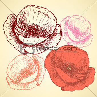 Sketch poppy, vector vintage background