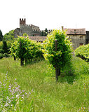landscape with vineyards and castle