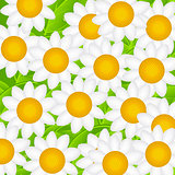 Camomile Daisy Background Vector Illustration
