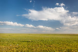 short grass prairie in Colorado