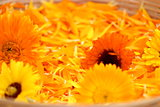 Calendula flowers and petals