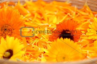 Calendula flowers and petals