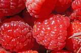 Ripe raspberry as a background extreme close-up (macro)