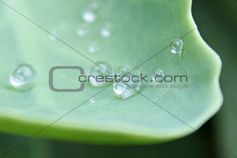 Close up of water drops on a leaf