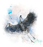Watercolor Image Of  Great Blue Heron
