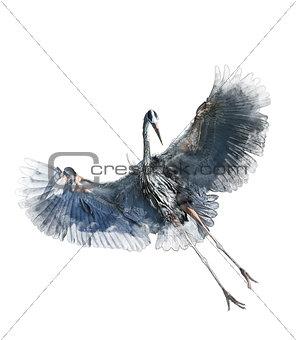 Watercolor Image Of  Great Blue Heron