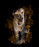 Watercolor Image Of  Leopard