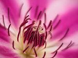 Pink macro flower closeup