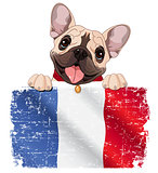 French bulldog fan