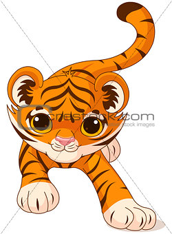 Crouching baby tiger