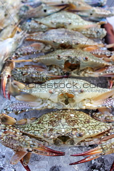 Fresh crab on ice