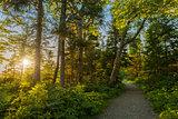 Warren lake path
