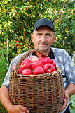Elderly man, harvesting a apple