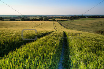 Beautiful landscape wheat field in bright Summer sunlight