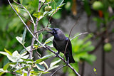black bird on tree