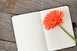 Blank notepad and orange gerbera flower