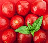 Fresh ripe cherry tomatoes and basil