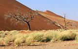 Sossusvlei sand dunes landscape in the Nanib desert near Sesriem