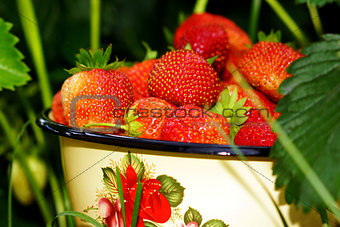 berry strawberry