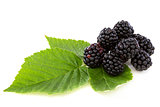 Ripe berry blackberry closeup.