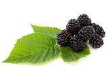 Ripe berry blackberry closeup.