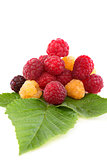 Red, white and black raspberries.