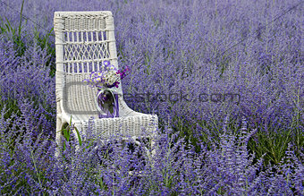 chair in Russian Sage