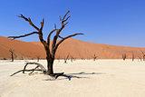 Sossusvlei dead valley landscape in the Nanib desert