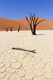 Sossusvlei dead valley landscape in the Nanib desert