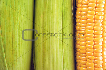 Young Sweet Corn on the Cob