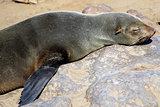 Colony of seals at Cape Cross Reserve, Atlantic Ocean coast