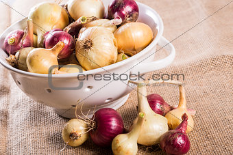 Freshly harvested onions from the garden