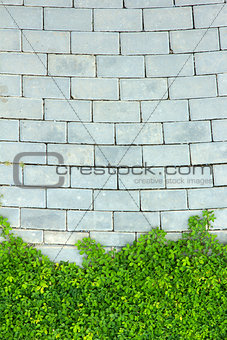 Brick wall and green leaf