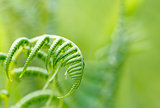 Fern leaf with shallow focus