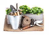 Garden tools in bucket with green plant