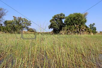 Okavango Delta water landscape.