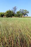 Okavango Delta water and plant landscape.