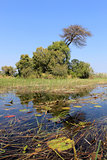 Okavango Delta water and plant landscape.