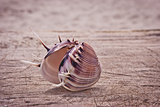 Beautiful seashell closeup.
