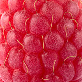 Close-up Background of Ripe Red Raspberry