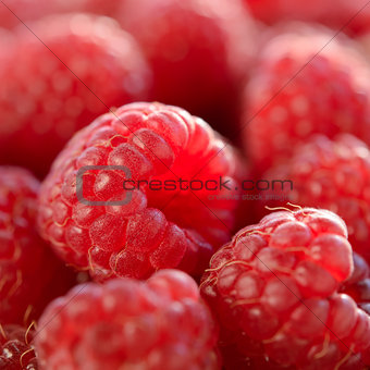 Closeup Image of the Juicy Raspberries
