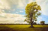 Tree grass field and sky vintage