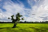 Tree grass field and sky