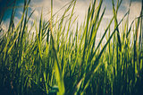 Green grass background vintage