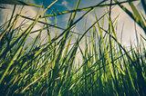 Green grass background vintage