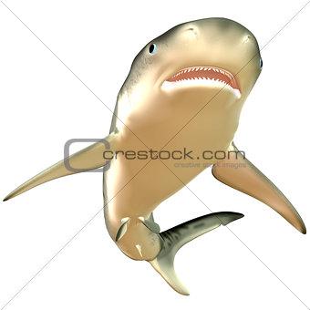 Tiger Shark Body